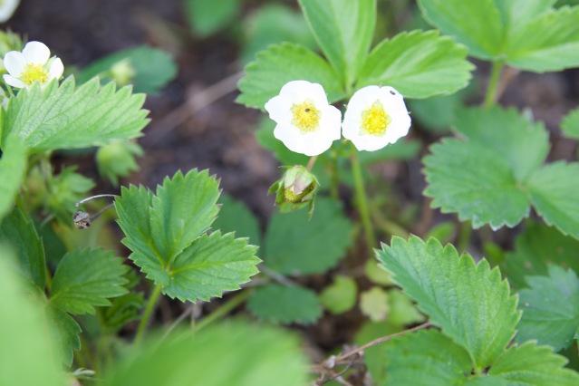 Garden Beginnings / Flour and Fancy